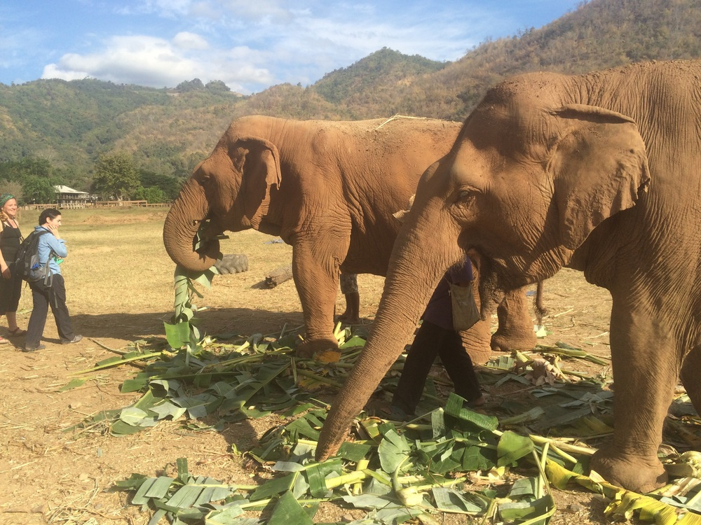 Thailand with Kids: Chiang Mai and Elephant Nature Park