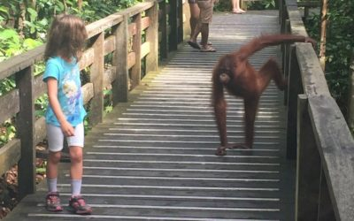 Malaysia with kids: Week 3 – Orang utans, sun bears and a river cruise!